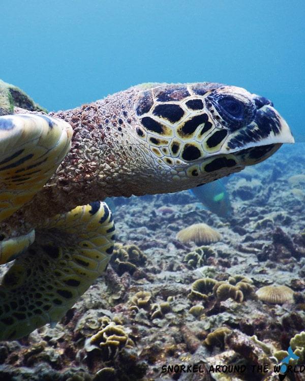 Turtle in Phuket