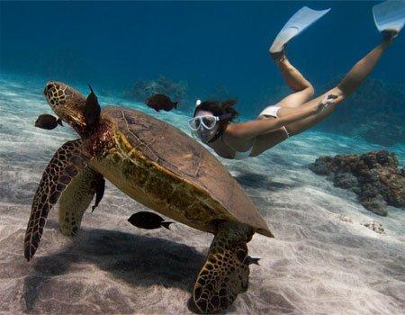 Maui beaches Maluaka - Snorkeling with turtle
