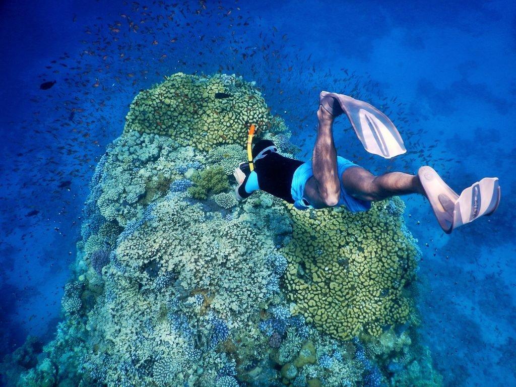 el faraana snorkeling temple reef