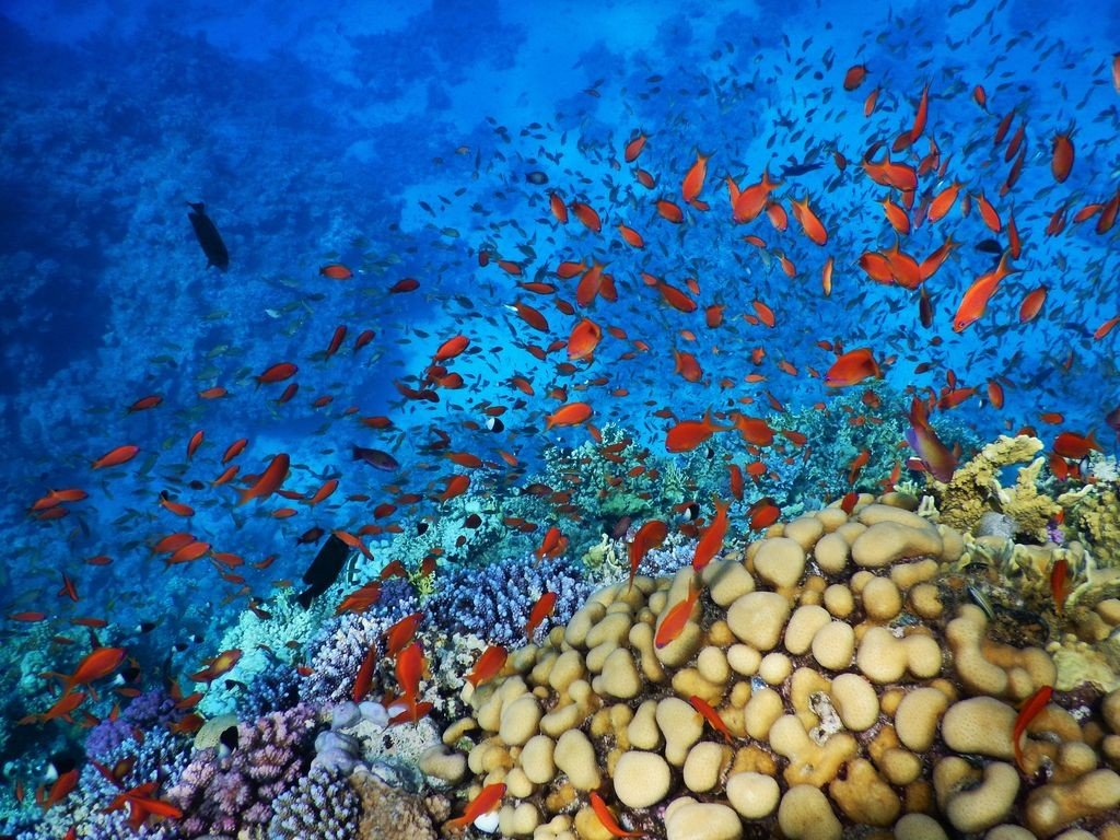 golden fish and coral reef
