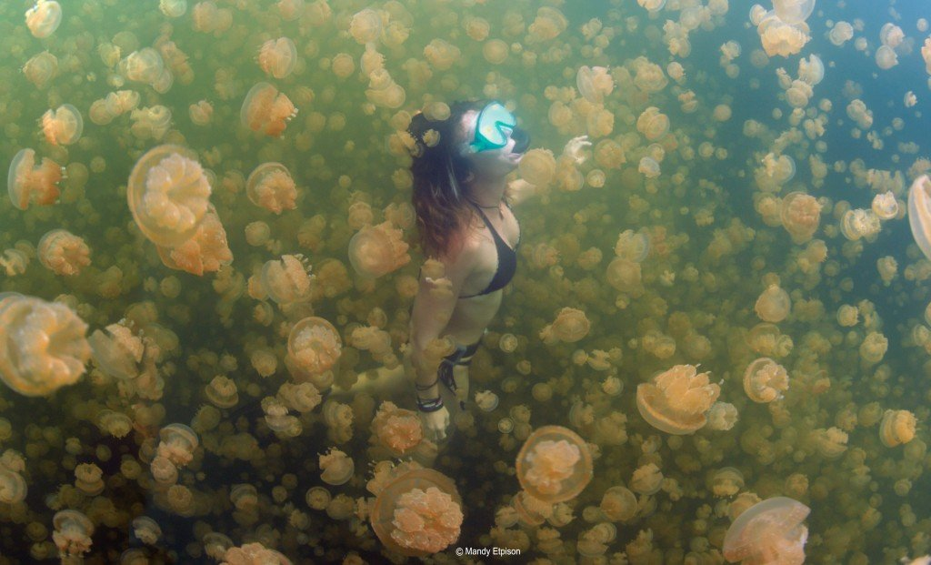 Swimming with Jellyfish in Lake Palau