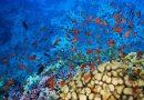 Coral reef Red Sea Hurghada Egypt