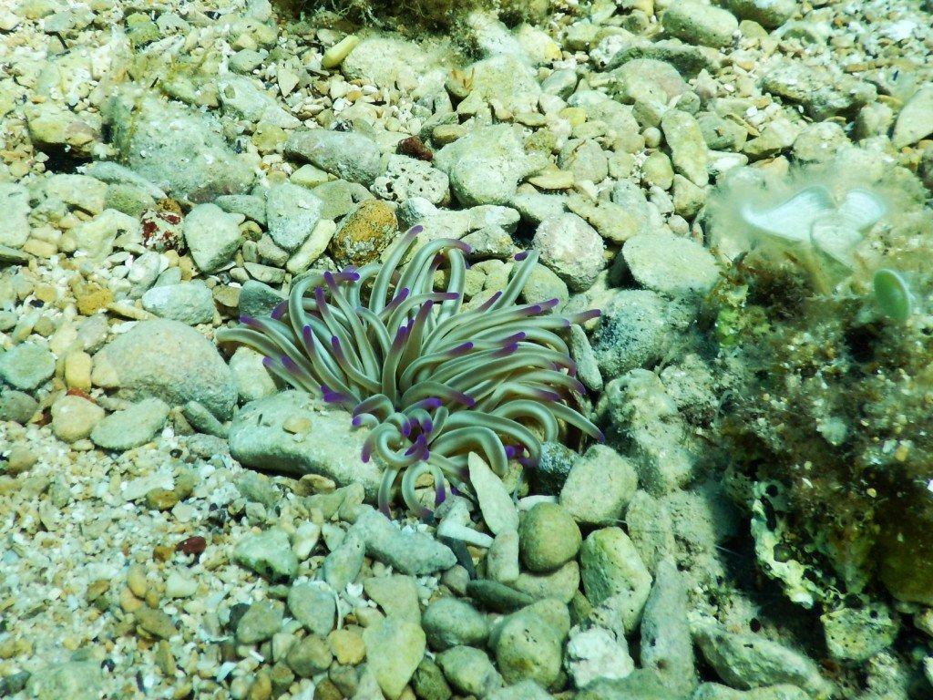 Adriatic Sea underwater life