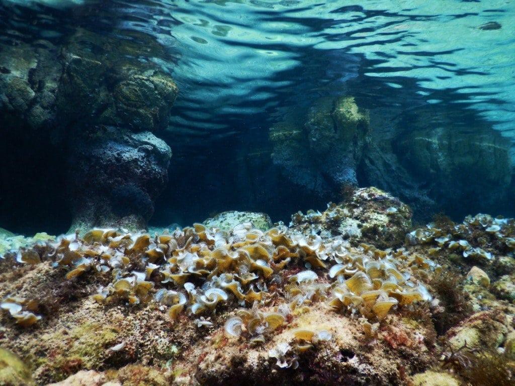 Glavotok - Croatia - Adriatic Sea