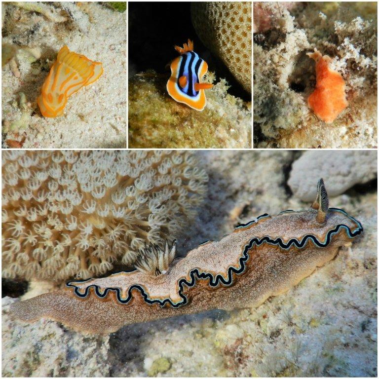 Blue Lagoon by the Coral Sea Sensatori Nudibranch