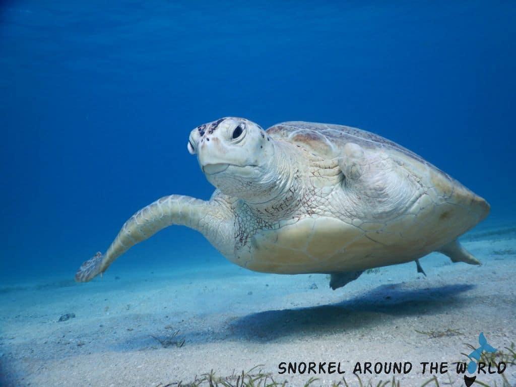Marsa Alam - Snorkeling with turtles