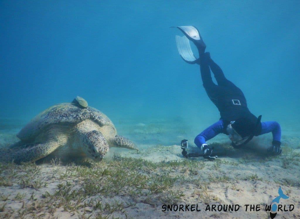 Turtle snorkel