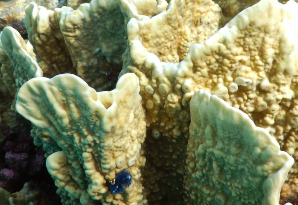 blue christmas tree worm
