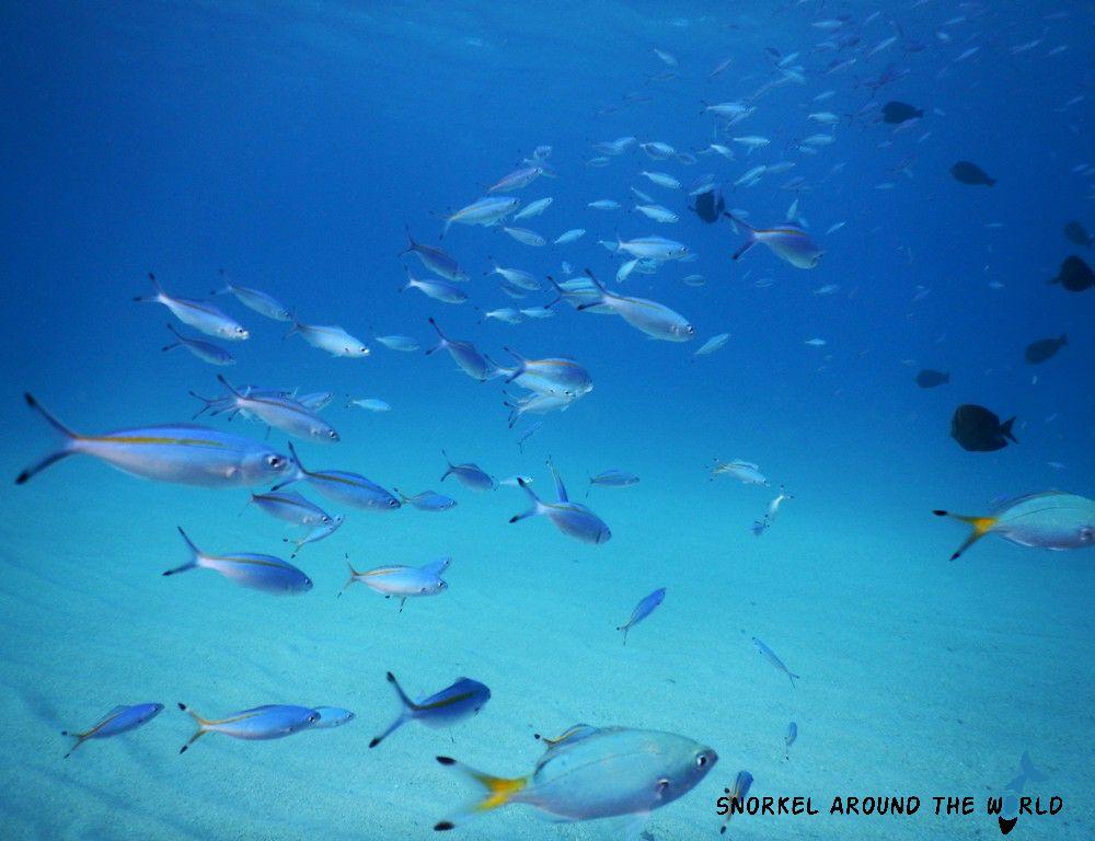 El Malikia - Fish