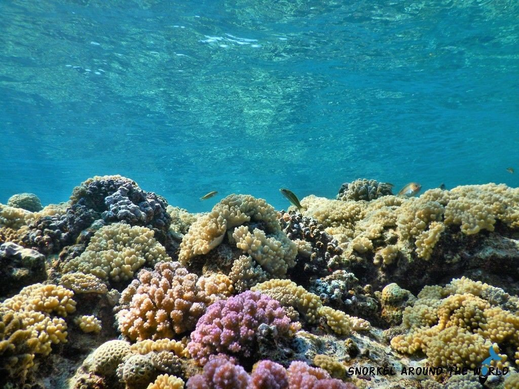 Coral Reef in Marsa Alam