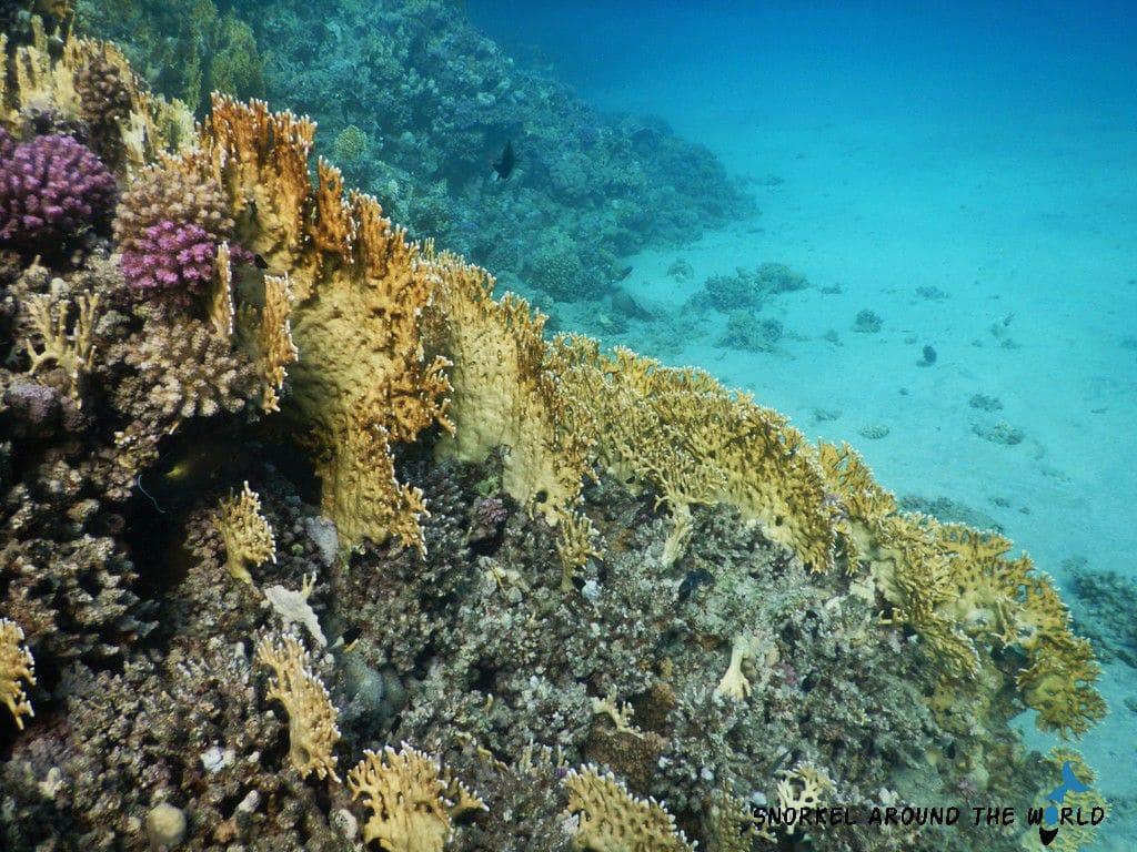 Marsa Alam Abu Dabbab - Coral bleaching