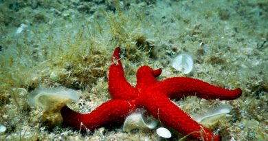 What are the sea stars? Get to know these creatures better!