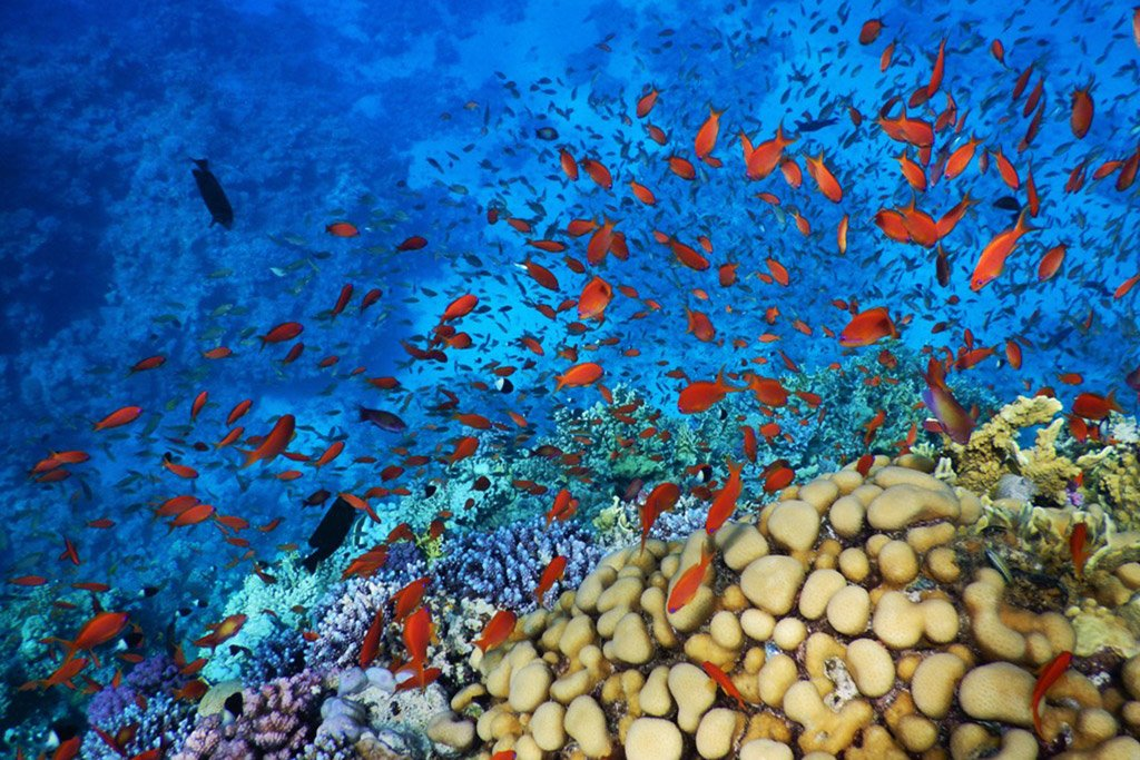 Coral reef Red Sea Hurghada Egypt spec2