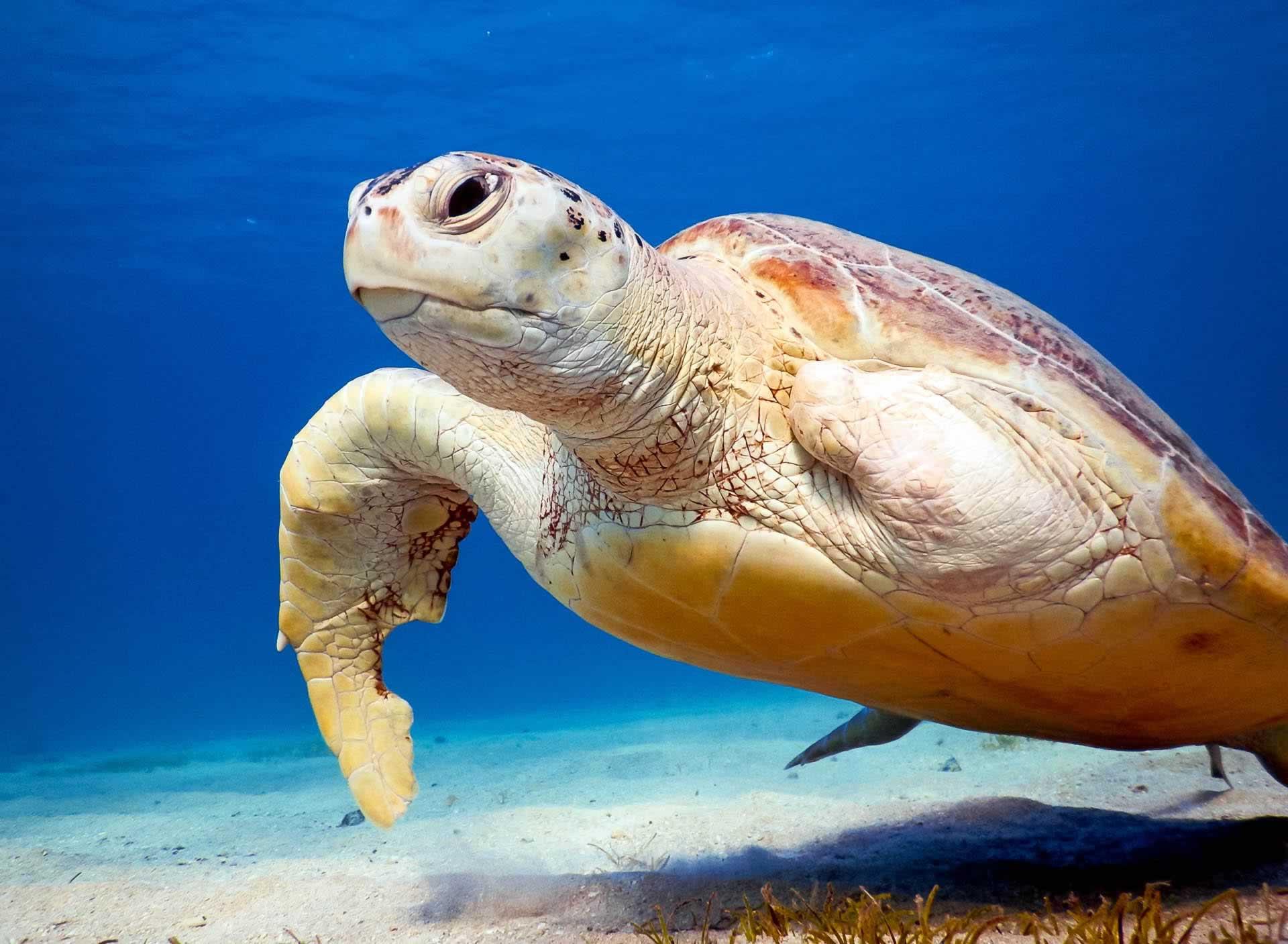 Turtle Marsa Alam
