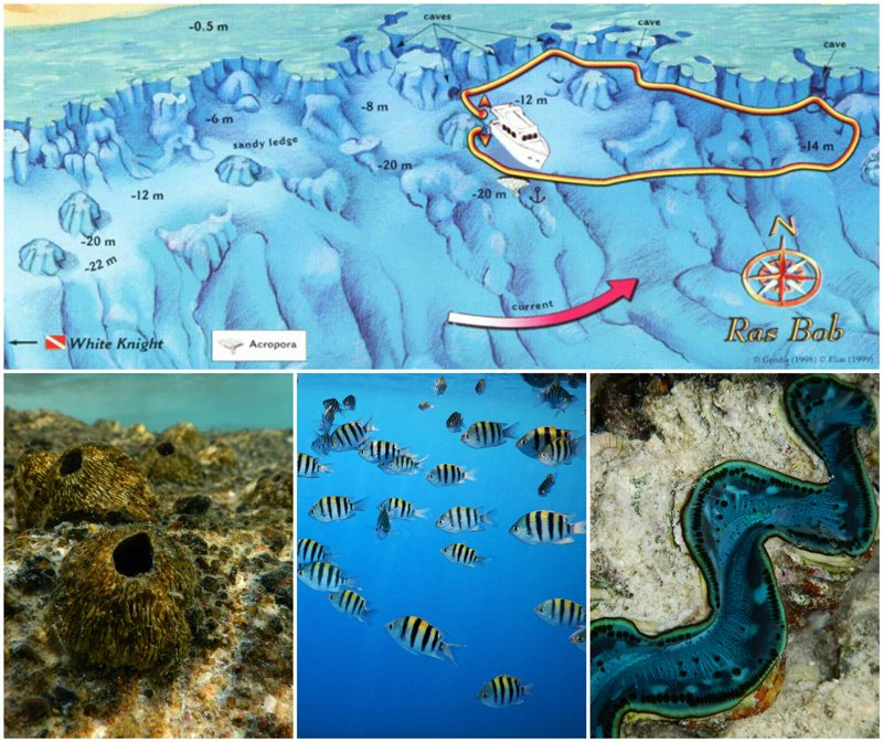 Ras-Bob-Snorkeling-Map
