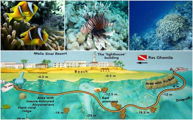 Ras-Nasrani-Melton-Beach-Melia-Sharm-Sharm