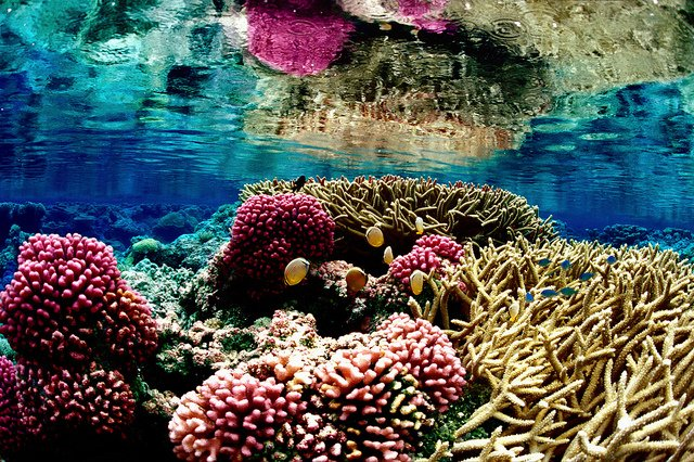 Protect Coral Reefs