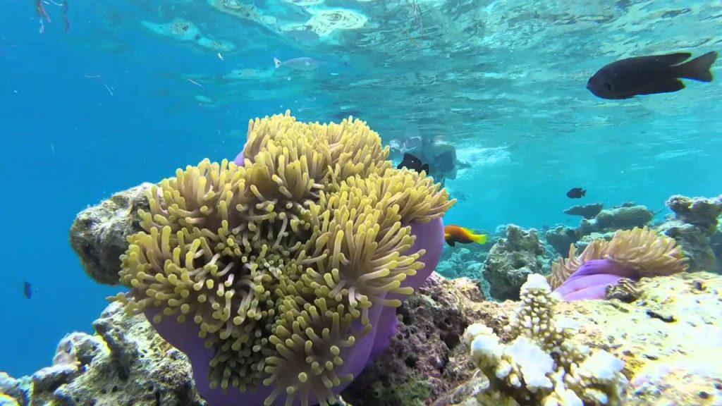 snorkeling-maldives-resorts-biyadhoo-island-anemone