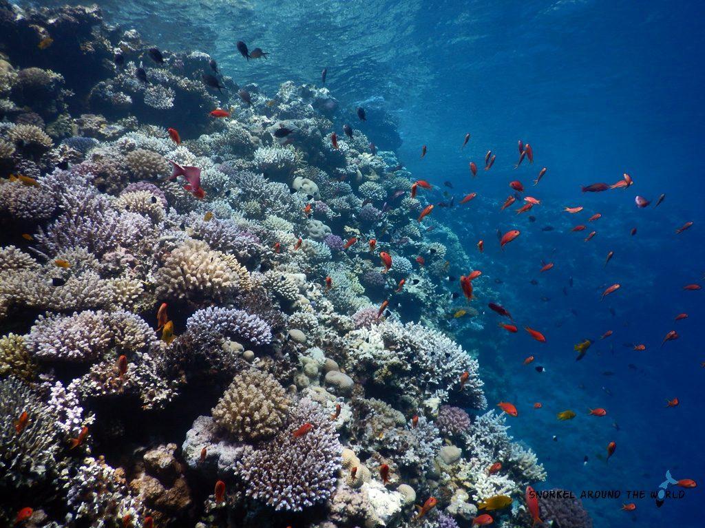Corals at Bells - Dahab