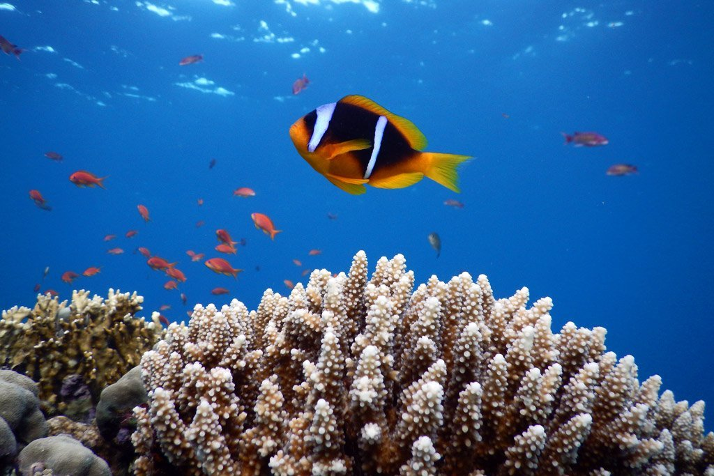 Dahab-snorkeling-index