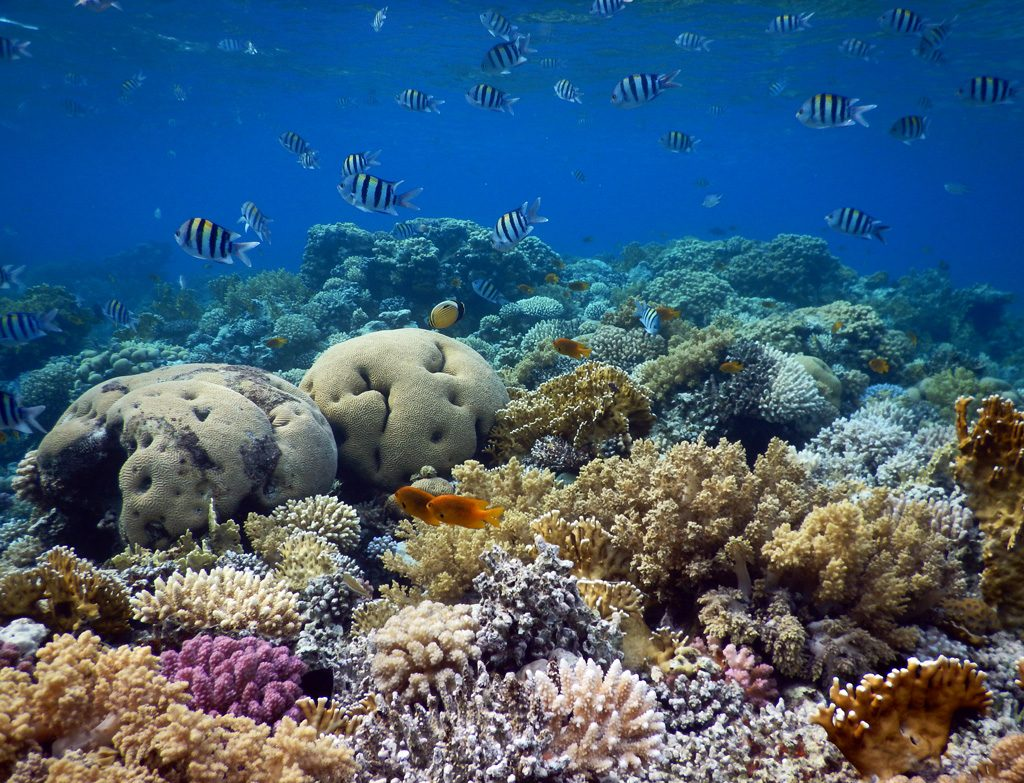 Dahab snorkeling places - Napoleon Reef