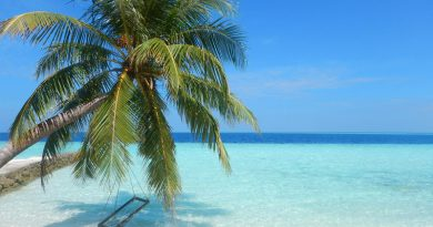 Palm Tree on Biyadhoo Island Resort