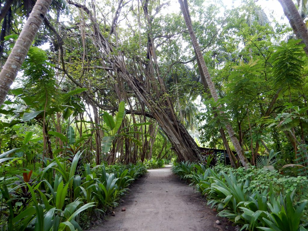 Jungle on Biyadhoo