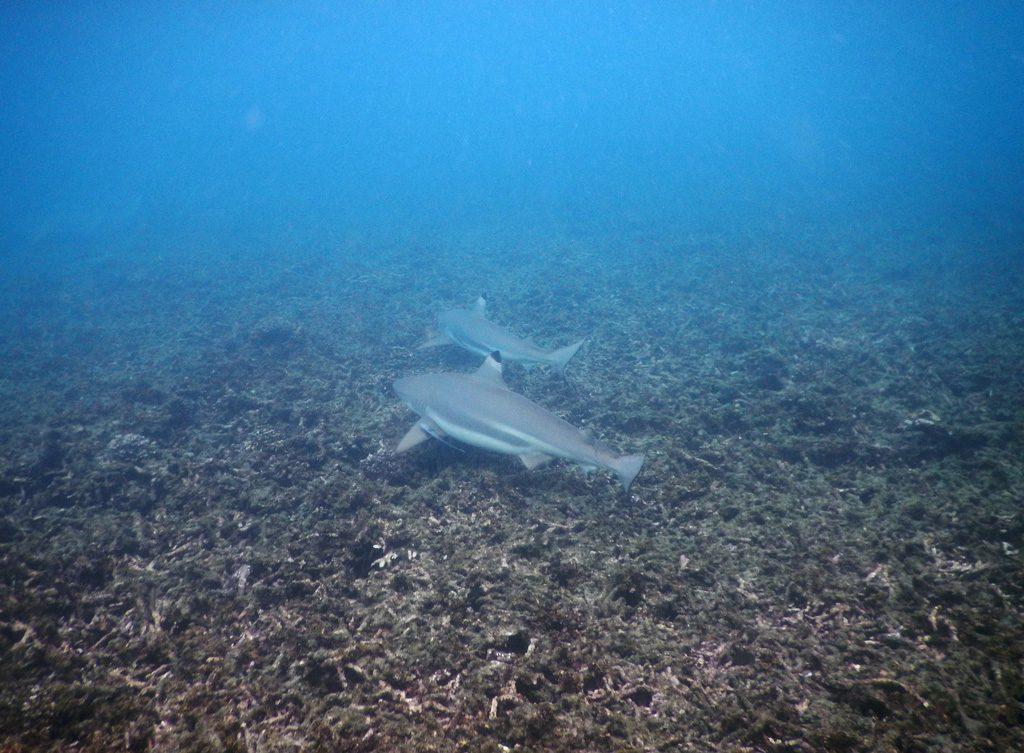 Koh Tao - Sharks bay
