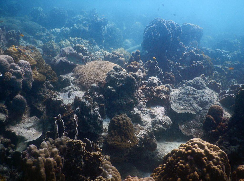 Koh Phangan Snorkeling - Koh Ma
