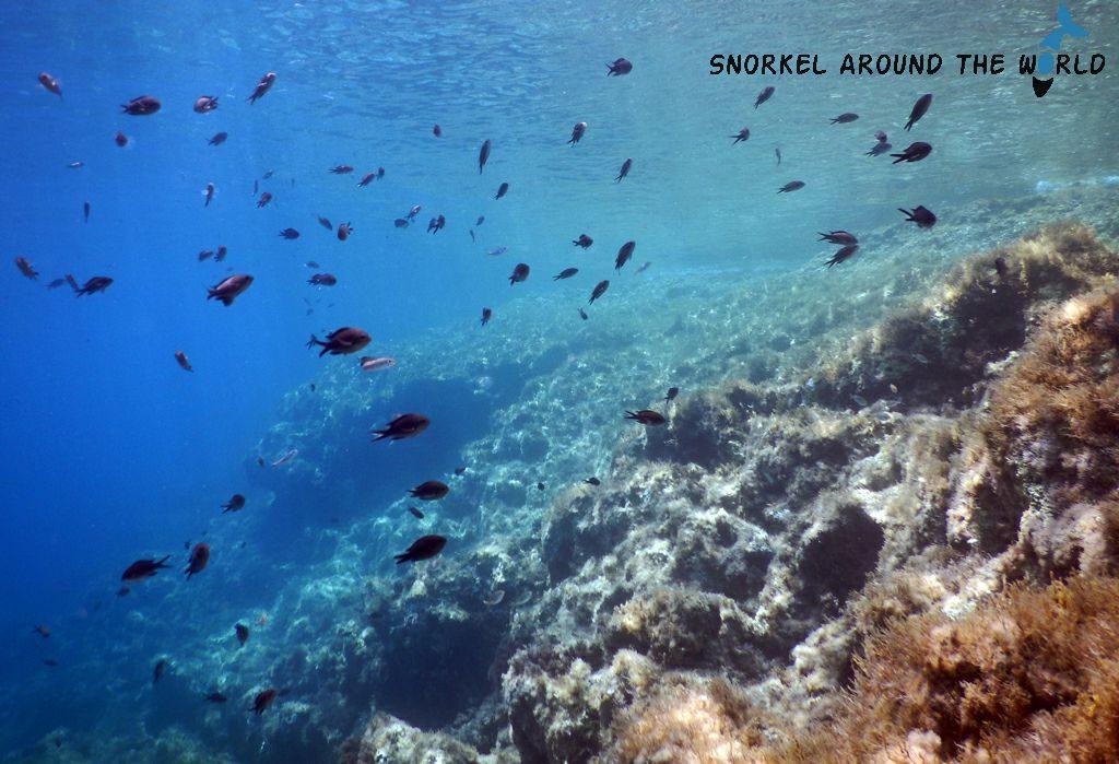 Snorkeling on Malta - Ghar Lapsi