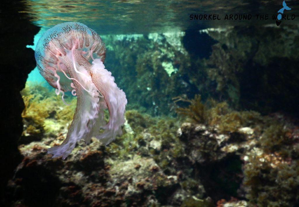 Jellyfish Malta