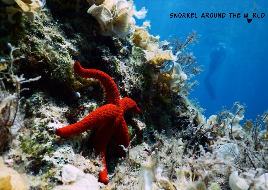 Sea Star Malta Snorkeling