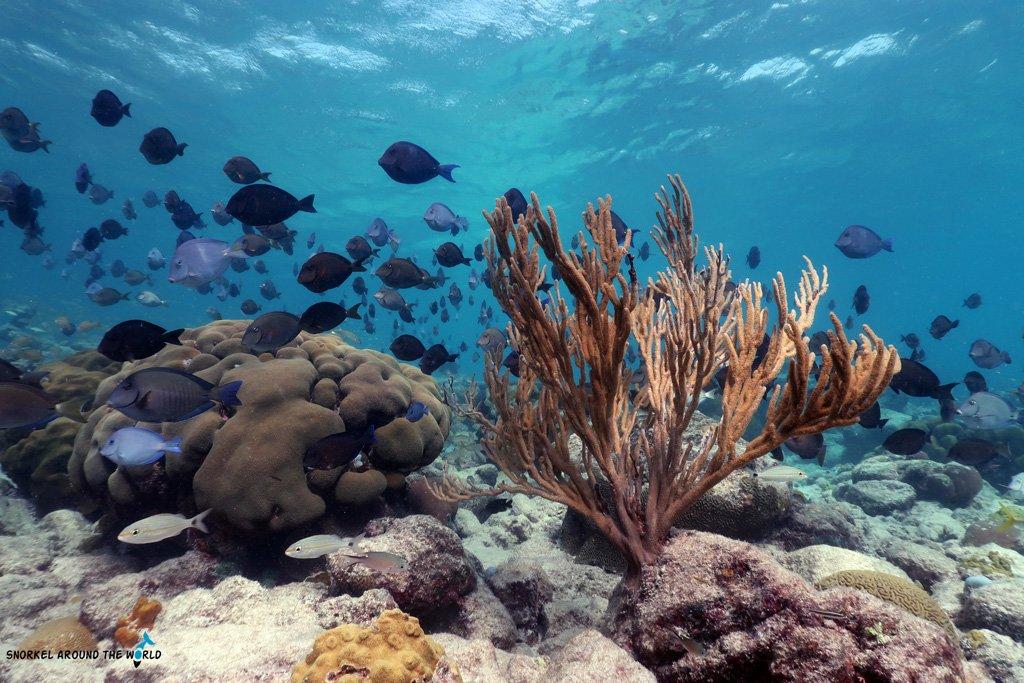 Arashi Beach - Snorkeling Aruba