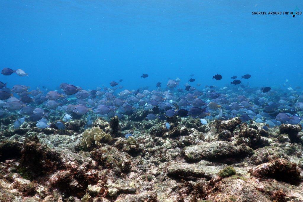 Baby beach - Snorkeling Aruba