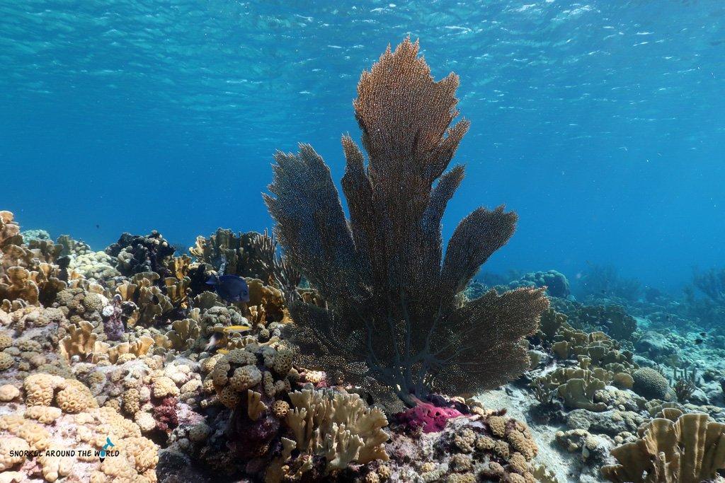 Crystal clear sea - Aruba Mangel Halto