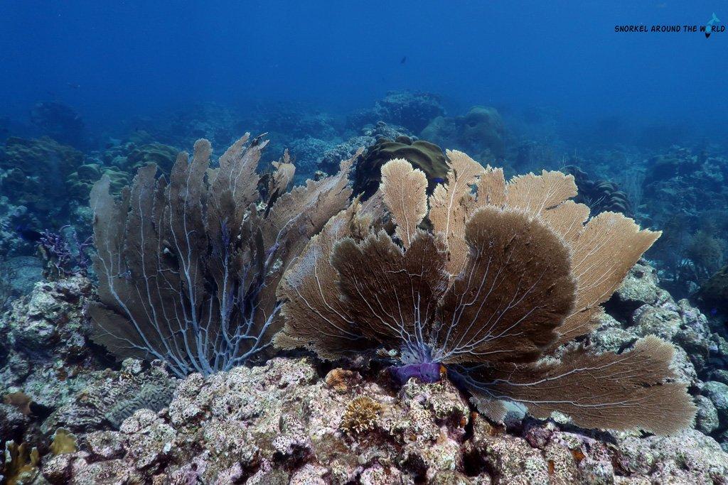 Palm Island Aruba - Snorkeling