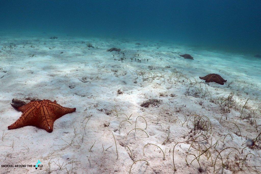 Seastars Aruba - Tres Trapi