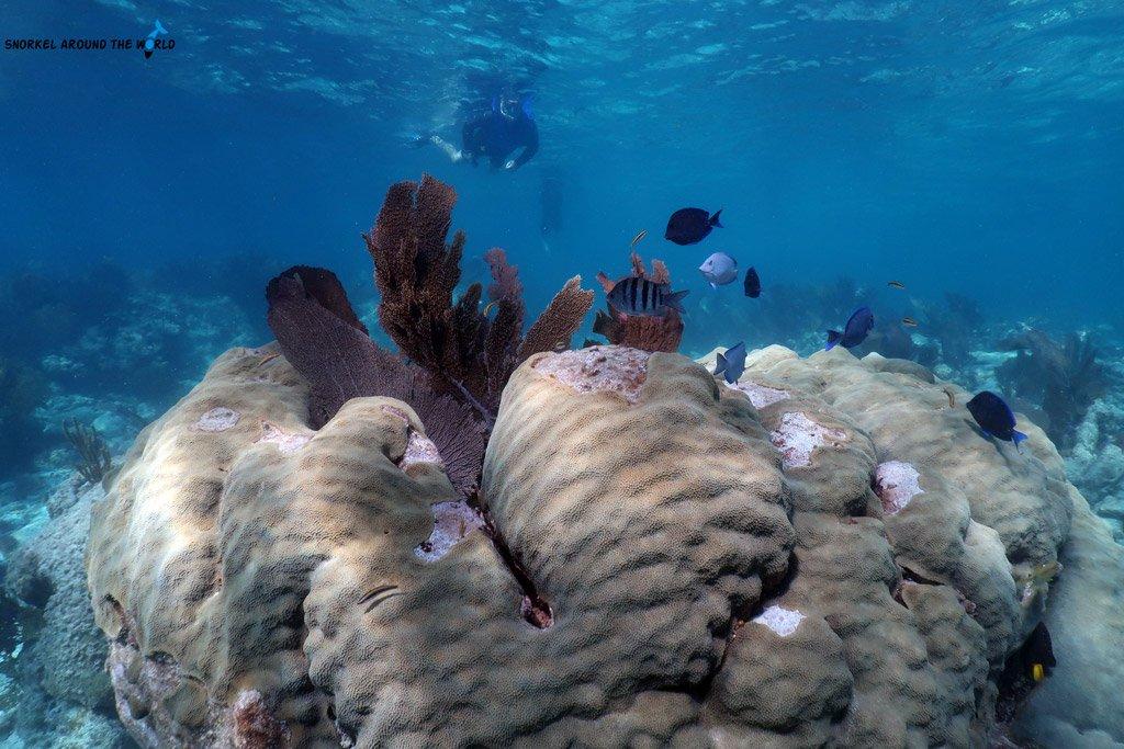 Key Largo John Pennekamp Coral Reef Park