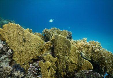 Abu Dabbab Leftside Corals