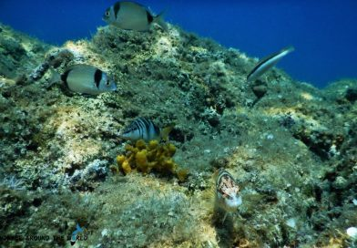 Adria marine life