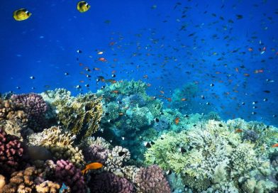 Best coral reef in Sharm el Sheikh
