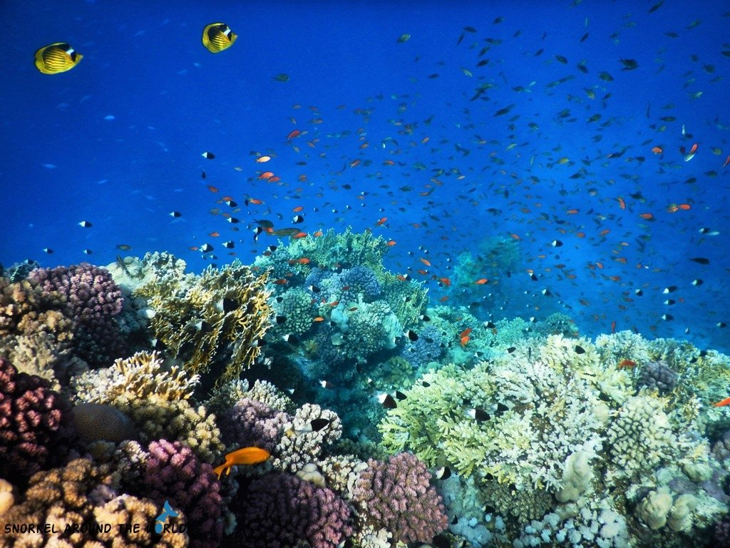 Best coral reef in Sharm el Sheikh