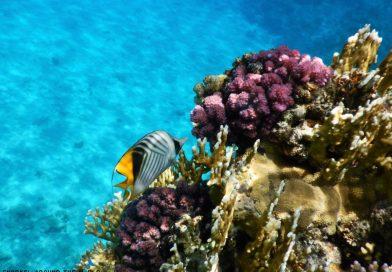 Best snorkeling Sharm el Sheikh