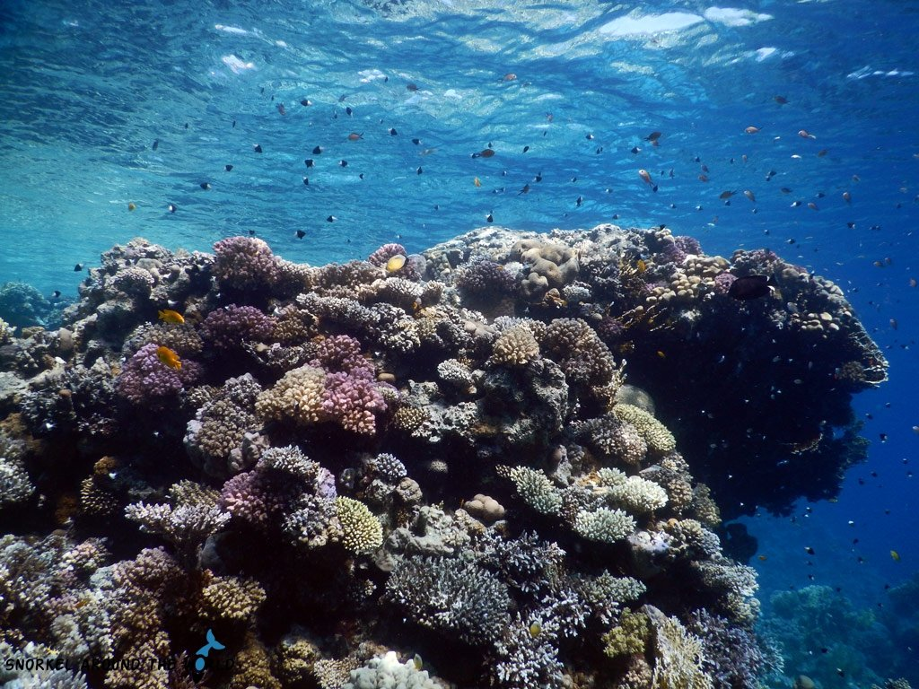 Best Hotels in Egypt snorkeling holiday