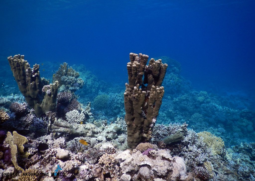 Best snorkeling in the world - Egypt