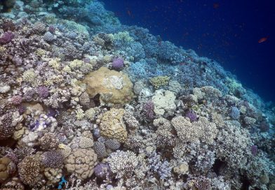 Best time to snorkel in Egypt - Sept-Oct