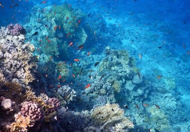 Coral reef hope spot Egypt