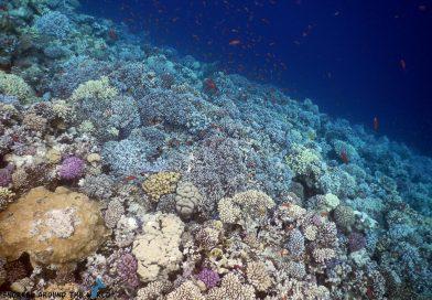 Coral Garden Dahab