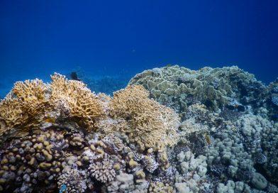 Coral Reef Abu Galum