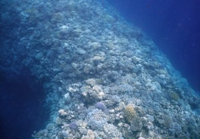 Coral Reef Blue Hole